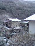 image/ptomato-2005-12-05T19:14:41-1.jpg